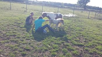 sam horse rescue-2